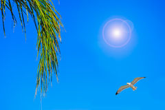 Palm branch under a flying seagull Royalty Free Stock Photos