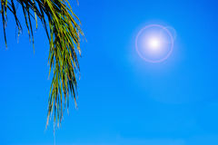 Palm branch under a shining sun Royalty Free Stock Image