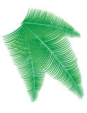 Palm branch vector illustration Stock Photography