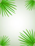 Palm branch vector illustration Royalty Free Stock Photo