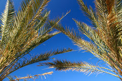 Palm branches Stock Images