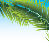 Palm branches Stock Image