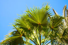 Palm branches against blue sky Stock Photos