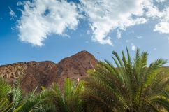 Palm branches against the high rocky mountains and blue sky with white clouds in Egypt Dahab South Sinai stock photography