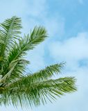 Palm branches against the sky royalty free stock photo