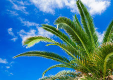 Palm branches against the sky Royalty Free Stock Image