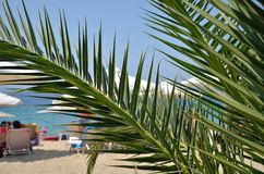 Palm branches and beach Royalty Free Stock Photos