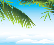 Palm branches on the cloudscape background Stock Image