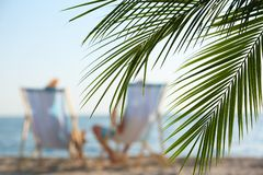 Palm branches and couple in beach chairs royalty free stock photos