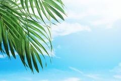 Palm Sunday concept royalty free stock photography
