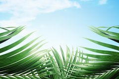 Palm Sunday concept royalty free stock image