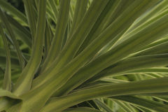 Palm branches Stock Photography