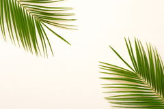 Palm branches on pale pink background. Flat lay, top view. copy space stock photos