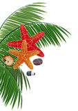 Palm branches, starfishes, pebble and cockleshell. On a white background Royalty Free Stock Images