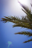 Palm branches on sunlight background Royalty Free Stock Photo