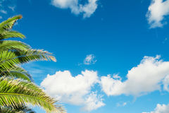Palm branches under a blue sky Stock Images