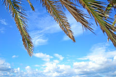 Palm branches under a blue sky Royalty Free Stock Photography