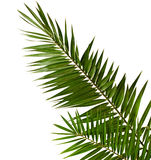 Palm brunch Stock Photos