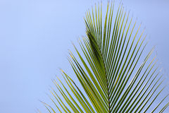 Palm brunch on sky background Stock Images