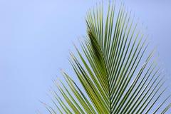 Palm brunch on sky background Stock Images