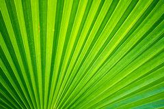 Palm bush background Stock Images