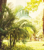 Palm Bush in City Park. Natural Background Toned Warm Royalty Free Stock Image