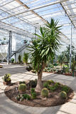 Palm and cactuses in Greenhouse. Beautiful terrace full with flower pots in a Botanical Garden Royalty Free Stock Image