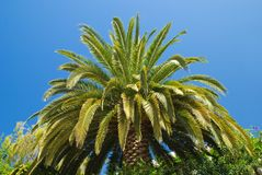 Palm Canopy stock photos