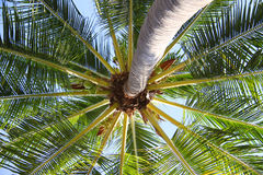 Palm canopy Stock Photo