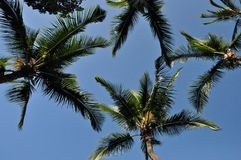 Palm Canopy Royalty Free Stock Images