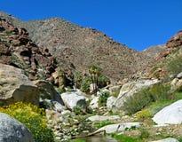 Palm Canyon, Anza-Borrego Desert. Approach to Palm Canyon in the spring, Anza-Borrego State Park, San Diego County, California royalty free stock photos