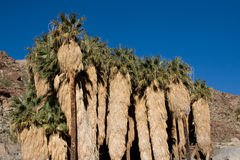 Palm Canyon California Stock Image