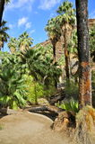 Palm Canyon, Palm Springs. Gorges and groves of California Fan Palms between the arid North slopes of the Santa Rosa Mountains. Palm Canyon, Palm Springs, CA royalty free stock images
