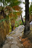 Palm Canyon, Palm Springs Stock Photography