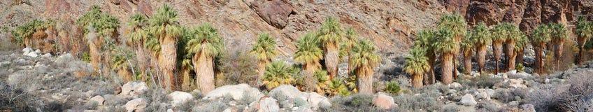 Palm Canyon Panorama Stock Images
