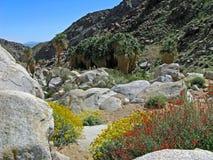 Palm Canyon, wildflowers stock photo