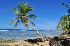 Palm in Caraïbische Kust Stock Afbeelding