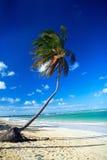 Palm on caribbean beach Royalty Free Stock Photography