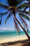 Palm  on caribbean beach Royalty Free Stock Photos
