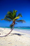 Palm on caribbean beach with blue sky Stock Images