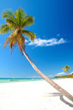 Palm on caribbean beach with white sand Stock Image