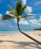 Palm on caribbean beach with white sand Royalty Free Stock Photos