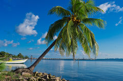 Palm on the Caribbean coast. Royalty Free Stock Photo