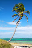 Palm on caribbean sea Stock Image