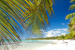 Palm on caribbean sea, island Saona Royalty Free Stock Image