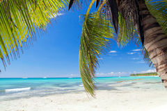 Palm on caribbean sea, Saona Royalty Free Stock Photography
