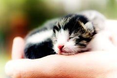 Palm cat Royalty Free Stock Photo