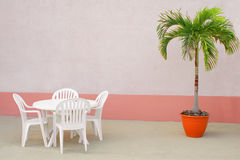 Palm and chairs Royalty Free Stock Photos