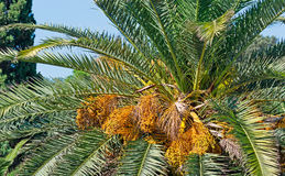Palm close up Royalty Free Stock Images
