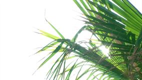 Palm Close White Background. Video of Palm Close White Background stock footage
